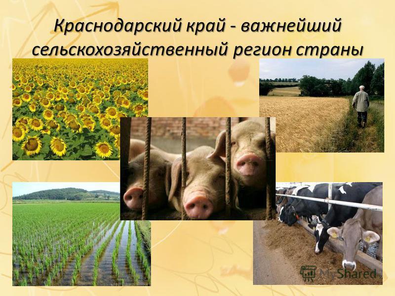 знакомство бесплатно и регистрации краснодарский край