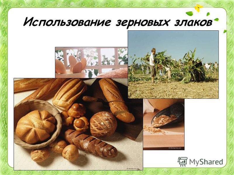 Использование зерновых злаков