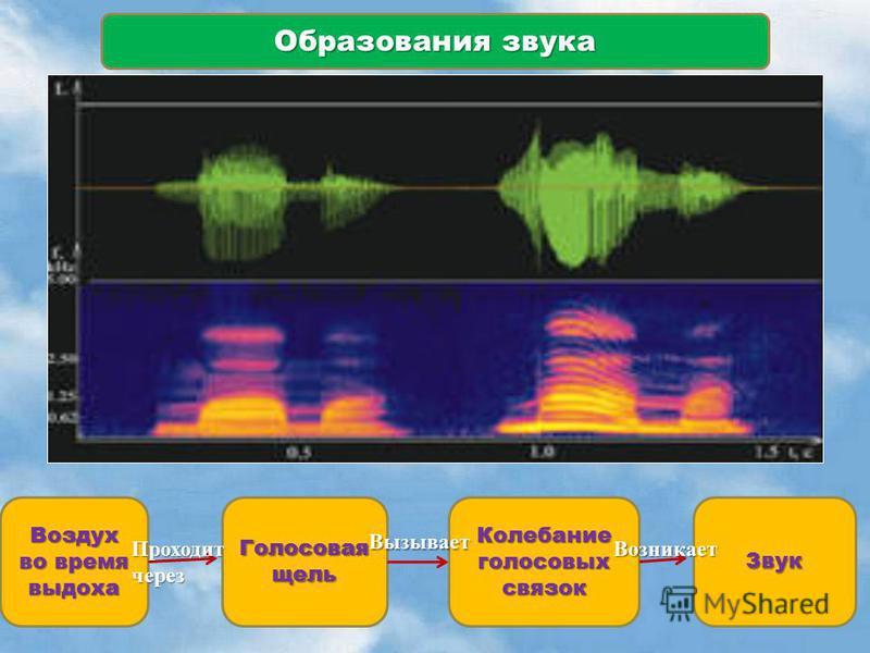 Образования звука Воздух во время выдоха Голосовая щель Колебание голосовых связок Звук Проходит через Вызывает Возникает