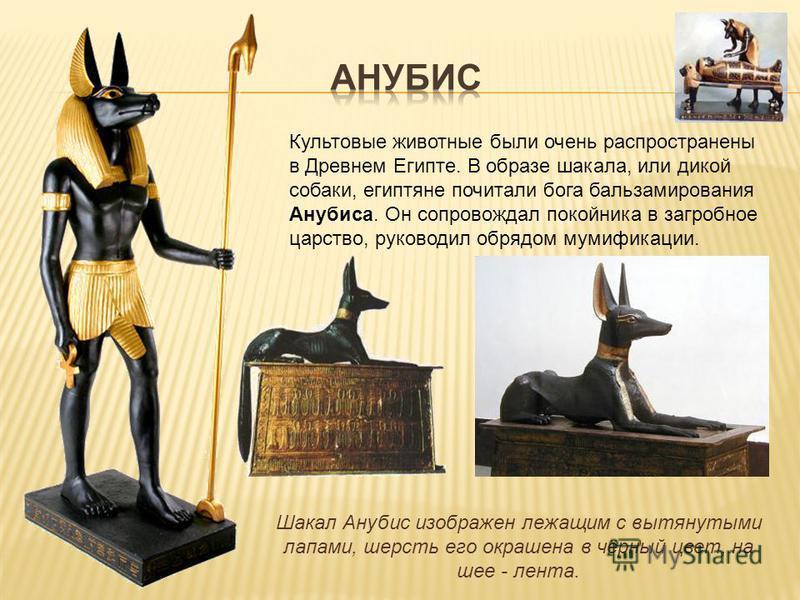 Культовые животные были очень распространены в Древнем Египте. В образе шакала, или дикой собаки, египтяне почитали бога бальзамирования Анубиса. Он сопровождал покойника в загробное царство, руководил обрядом мумификации. Шакал Анубис изображен лежа