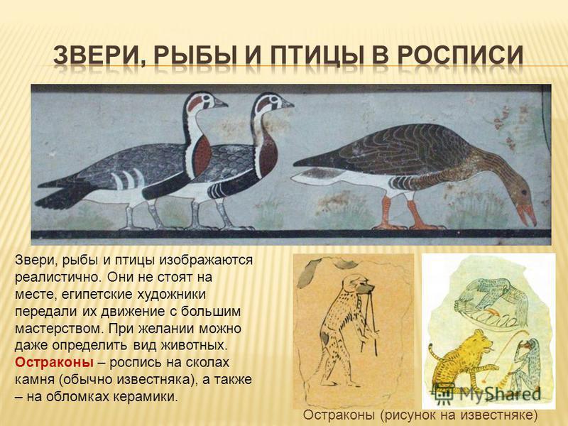 Звери, рыбы и птицы изображаются реалистично. Они не стоят на месте, египетские художники передали их движение с большим мастерством. При желании можно даже определить вид животных. Остраконы – роспись на сколах камня (обычно известняка), а также – н