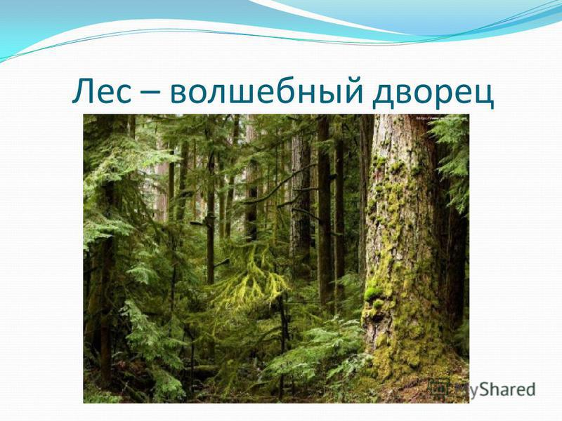 Лес – волшебный дворец