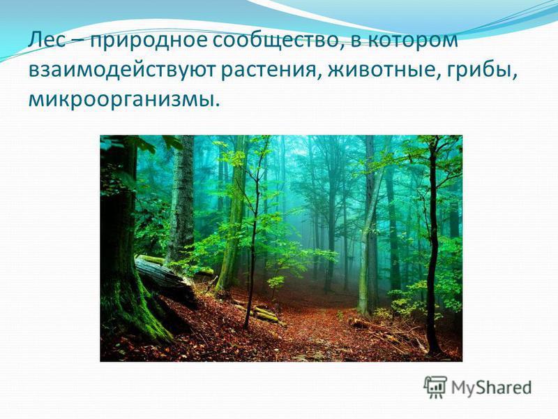 Лес – природное сообщество, в котором взаимодействуют растения, животные, грибы, микроорганизмы.
