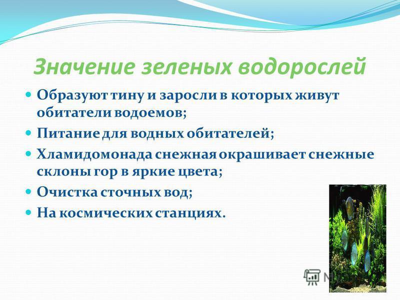 Значение зеленых водорослей Образуют тину и заросли в которых живут обитатели водоемов; Питание для водных обитателей; Хламидомонада снежная окрашивает снежные склоны гор в яркие цвета; Очистка сточных вод; На космических станциях.