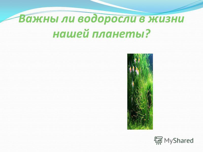 Важны ли водоросли в жизни нашей планеты?