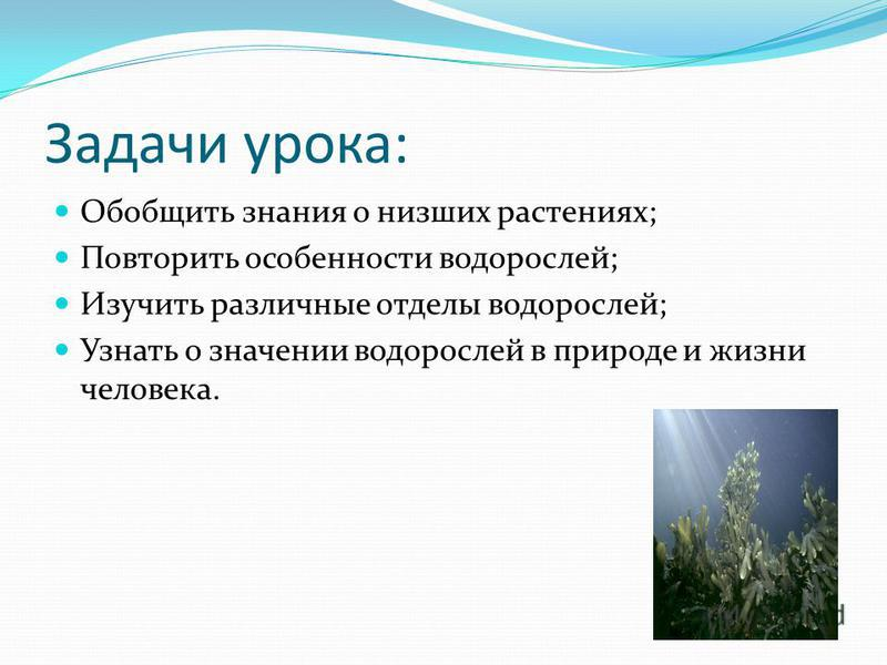Задачи урока: Обобщить знания о низших растениях; Повторить особенности водорослей; Изучить различные отделы водорослей; Узнать о значении водорослей в природе и жизни человека.