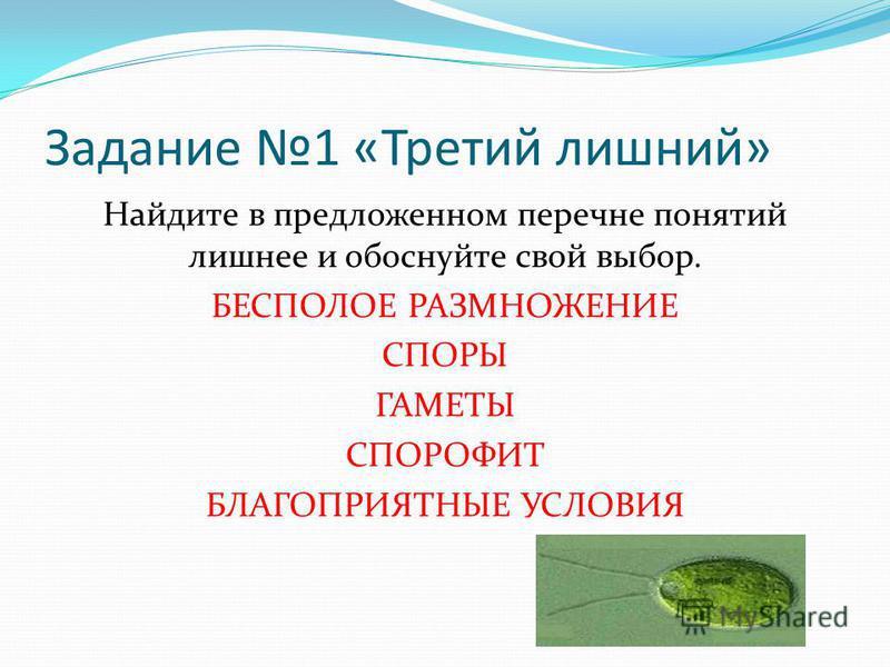 Задание 1 «Третий лишний» Найдите в предложенном перечне понятий лишнее и обоснуйте свой выбор. БЕСПОЛОЕ РАЗМНОЖЕНИЕ СПОРЫ ГАМЕТЫ СПОРОФИТ БЛАГОПРИЯТНЫЕ УСЛОВИЯ