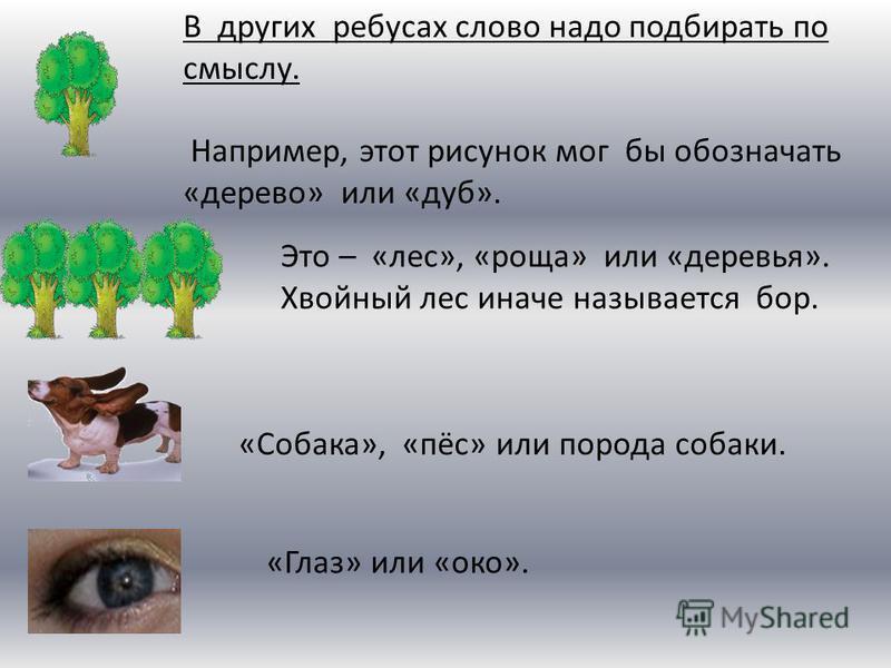 В других ребусах слово надо подбирать по смыслу. Например, этот рисунок мог бы обозначать «дерево» или «дуб». Это – «лес», «роща» или «деревья». Хвойный лес иначе называется бор. «Собака», «пёс» или порода собаки. «Глаз» или «око».