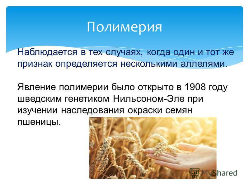 Полимерия Наблюдается в тех случаях, когда один и тот же признак определяется несколькими аллелями. Явление полимерии было открыто в 1908 году шведским генетиком Нильсоном-Эле при изучении наследования окраски семян пшеницы.