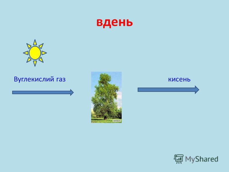 вдень Вуглекислий газ кисень