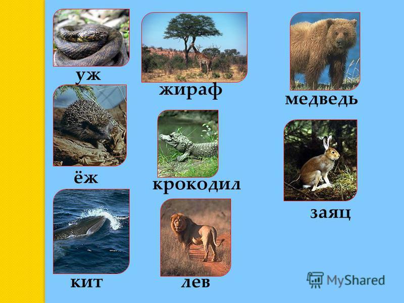 уж ёж медведь крокодил кит заяц жираф лев