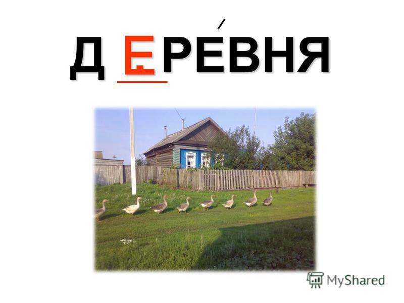 Д. РЕВНЯ Е