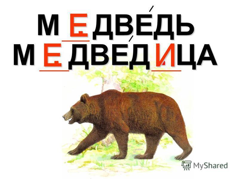 М. ДВЕДЬ Е М. ДВЕД. ЦА ЕИ