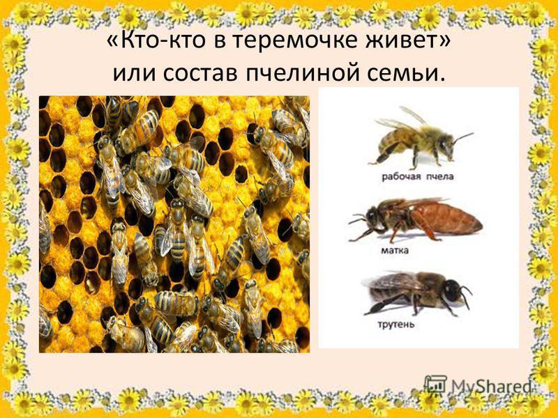 «Кто-кто в теремочке живет» или состав пчелиной семьи.