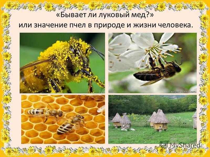 «Бывает ли луковый мед?» или значение пчел в природе и жизни человека.