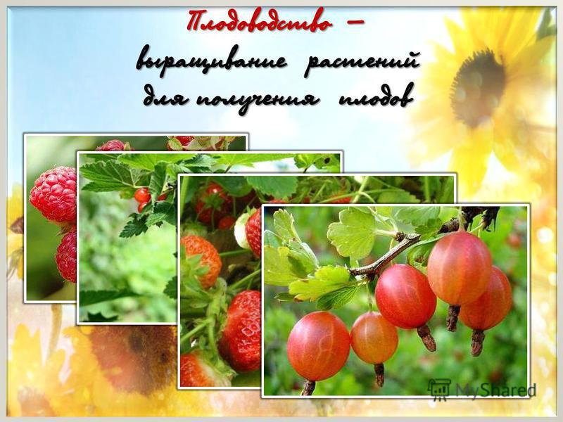 Плодоводство – выращивание растений для получения плодов