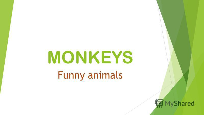 MONKEYS Funny animals