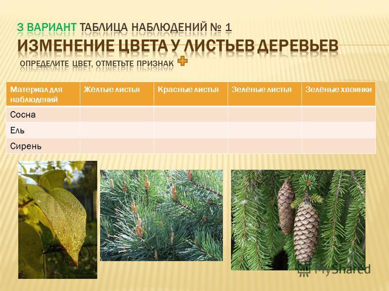 определите цвет, отметьте признак Материал для наблюдений Жёлтые листья Красные листья Зелёные листья Липа Дуб Рябина