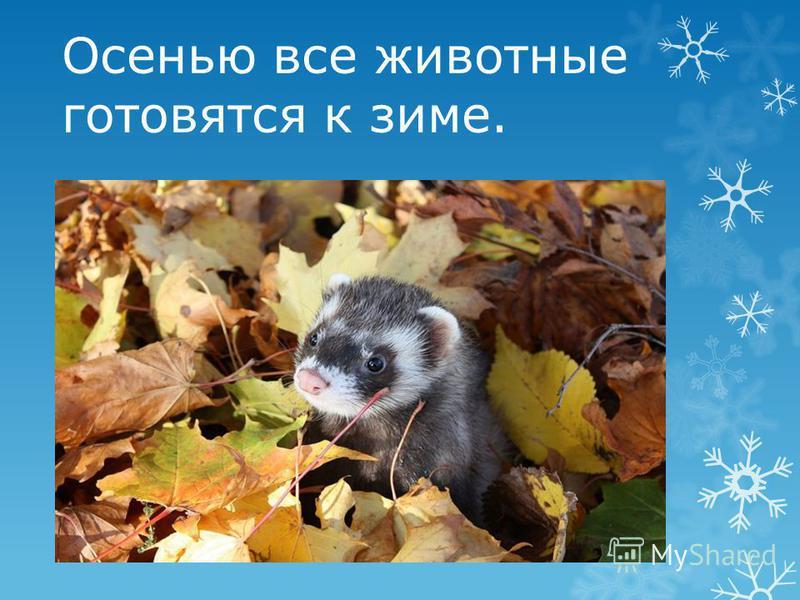 Осенью все животные готовятся к зиме.