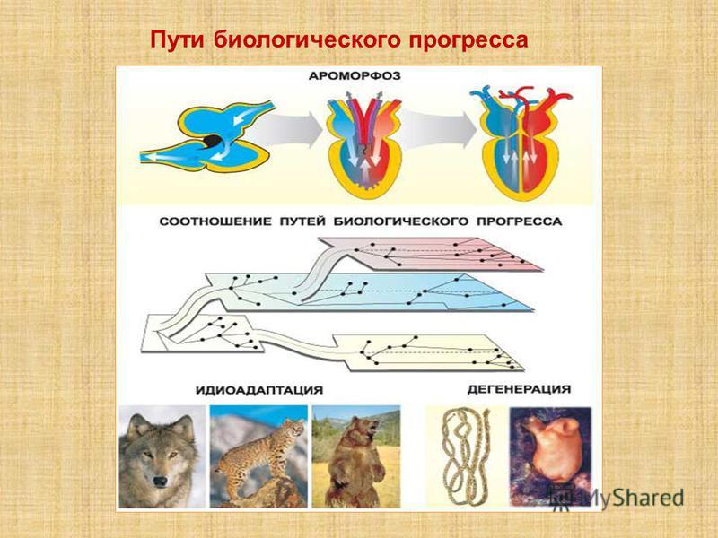Пути биологического прогресса