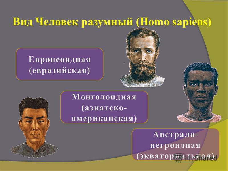 Вид Человек разумный (Homo sapiens)