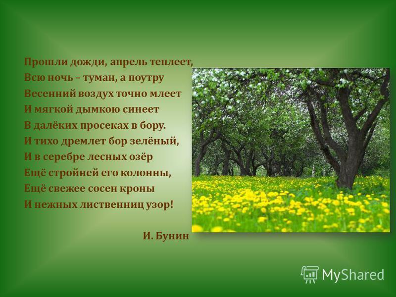 Прошли дожди, апрель теплеет, Всю ночь – туман, а поутру Весенний воздух точно млеет И мягкой дымкою синеет В далёких просеках в бору. И тихо дремлет бор зелёный, И в серебре лесных озёр Ещё стройней его колонны, Ещё свежее сосен кроны И нежных листв