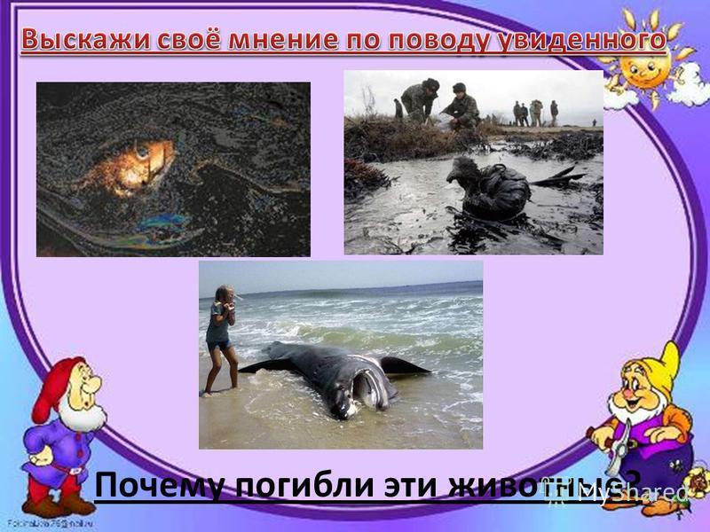 Почему погибли эти животные?