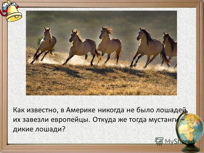 Как известно, в Америке никогда не было лошадей, их завезли европейцы. Откуда же тогда мустанги – дикие лошади?
