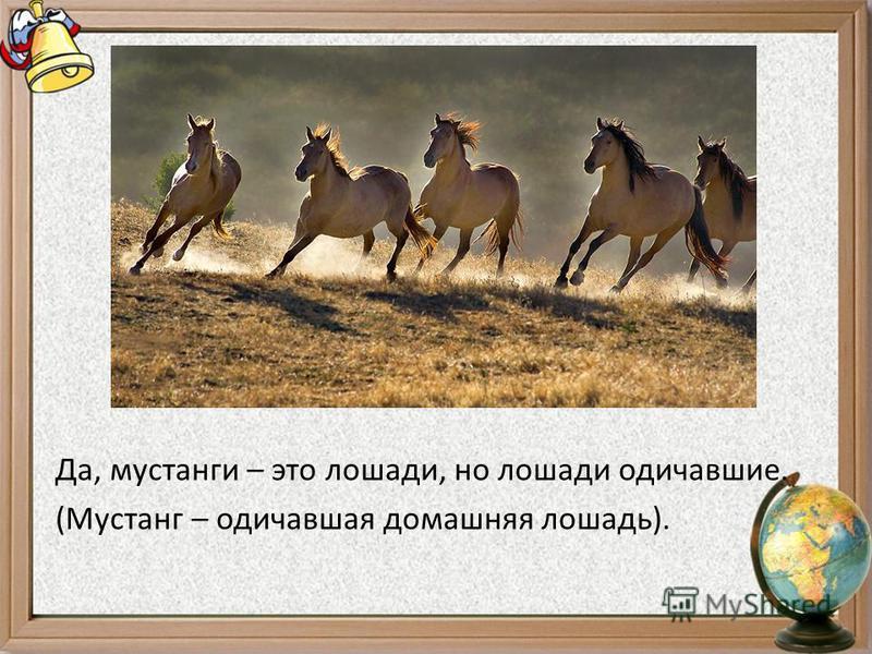 Да, мустанги – это лошади, но лошади одичавшие. (Мустанг – одичавшая домашняя лошадь).