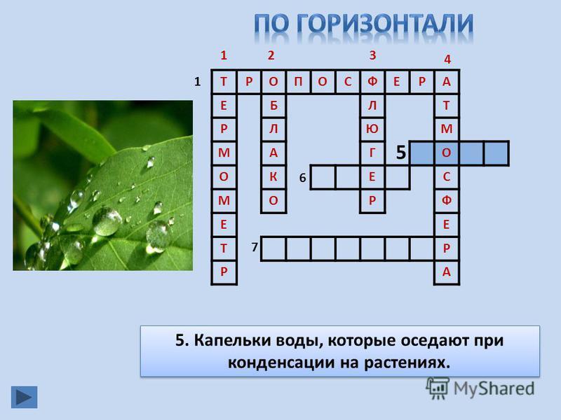 ТРОПОСФЕРА ЕБЛТ РЛЮМ МАГО ОКЕС МОРФ ЕЕ ТР РА 1 23 4 5 6 7 5. Капельки воды, которые оседают при конденсации на растениях. 1