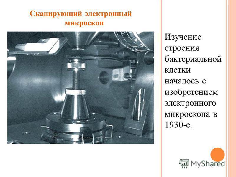 Изучение строения бактериальной клетки началось с изобретением электронного микроскопа в 1930-е. Сканирующий электронный микроскоп