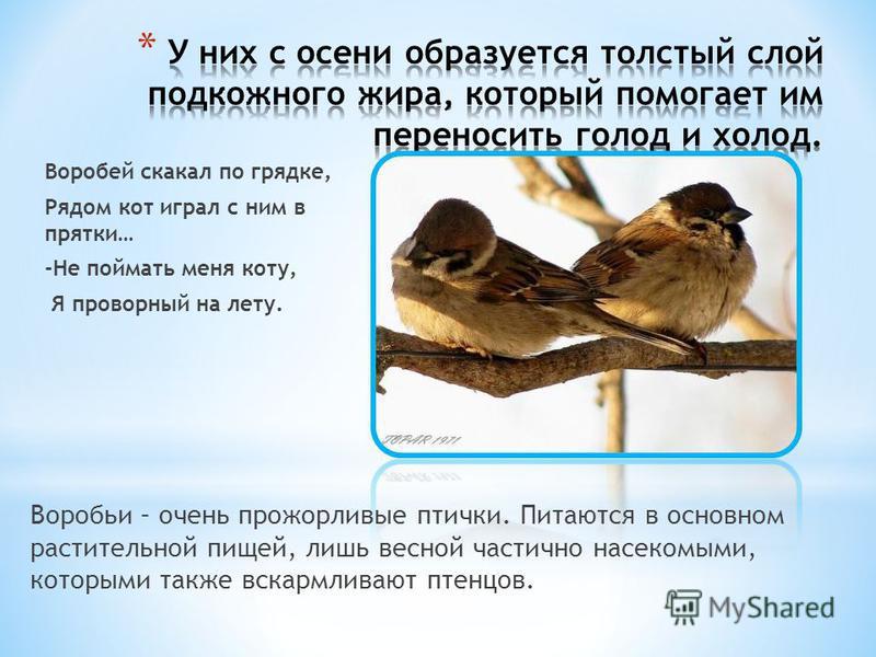 Эту группу составляют все оседлые птицы и птицы, прикочевавшие в данную местность на зимовку. Зимуют в нашем крае не все птицы, а только приспособленные к выживанию в суровых погодных условиях.В поисках пищи птицы перебираются поближе к жилью человек