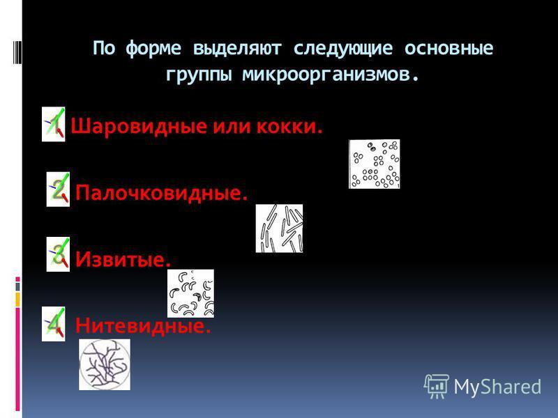 По форме выделяют следующие основные группы микроорганизмов. Шаровидные или кокки. Палочковидные. Извитые. Нитевидные.