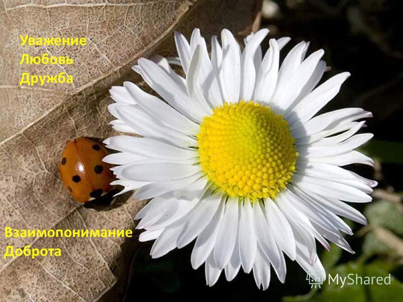 Уважение Любовь Дружба Взаимопонимание Доброта