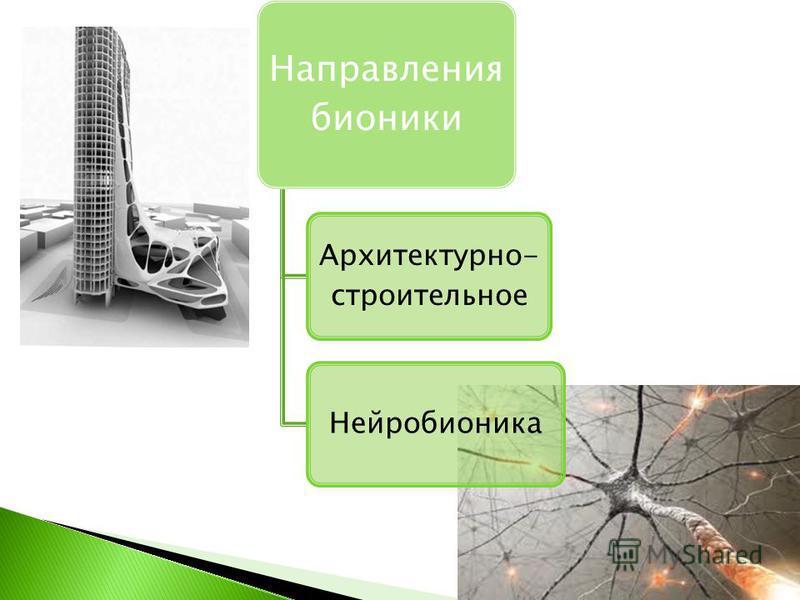 Направления бионики Архитектурно- строительное Нейробионика