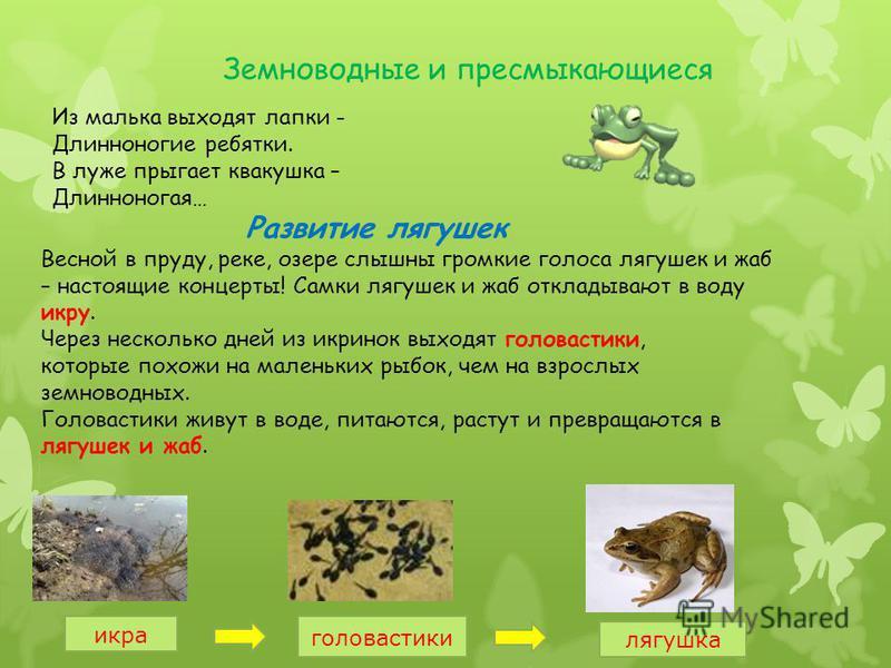 лягушка окружающий мир 3 класс