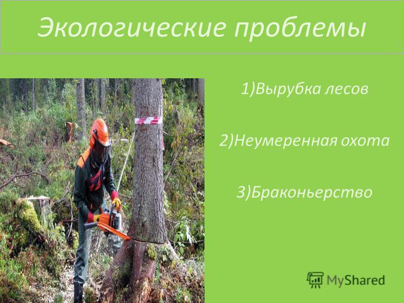 Экологические проблемы 1)Вырубка лесов 2)Неумеренная охота 3)Браконьерство