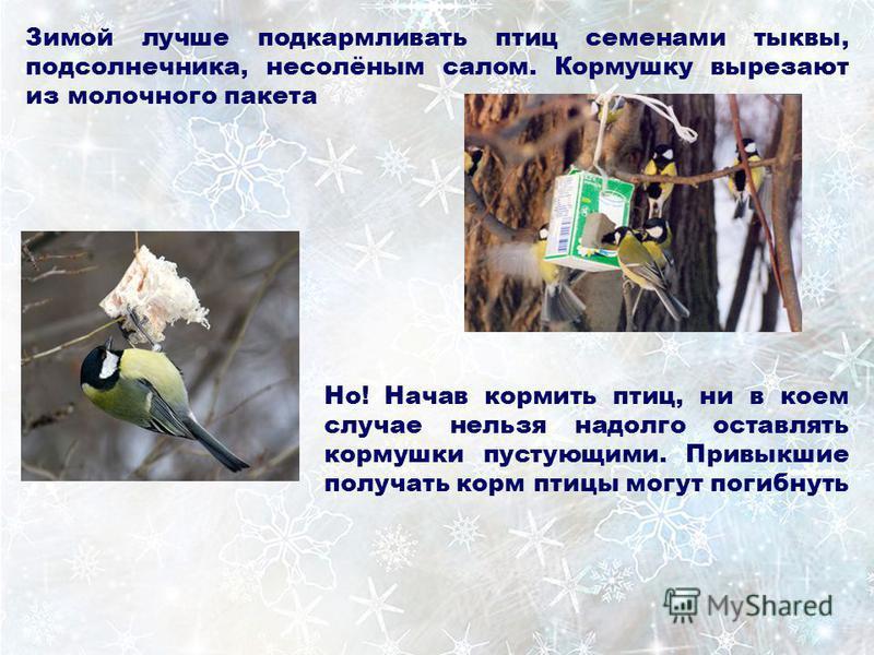 Зимой лучше подкармливать птиц семенами тыквы, подсолнечника, несолёным салом. Кормушку вырезают из молочного пакета Но! Начав кормить птиц, ни в коем случае нельзя надолго оставлять кормушки пустующими. Привыкшие получать корм птицы могут погибнуть