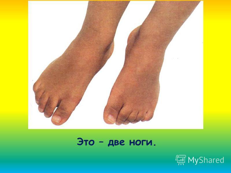 Это – две ноги.