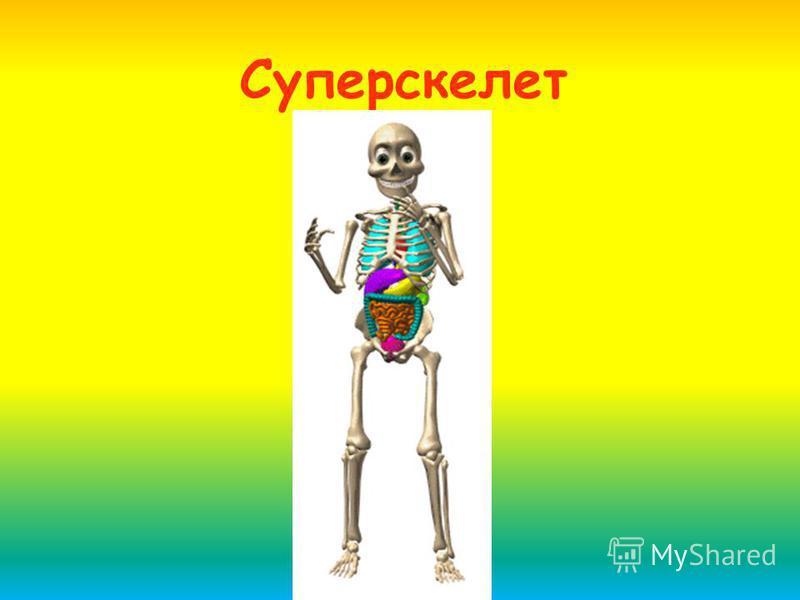 Суперскелет