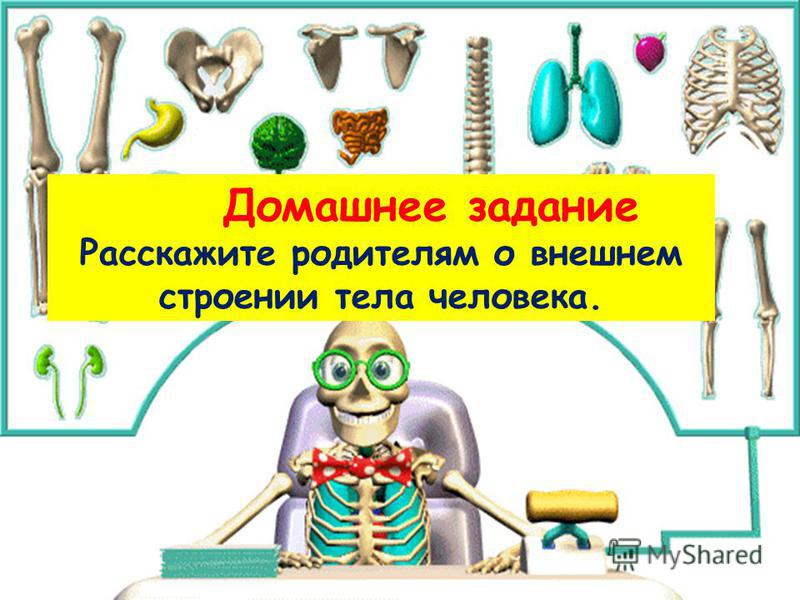 Домашнее задание Расскажите родителям о внешнем строении тела человека.
