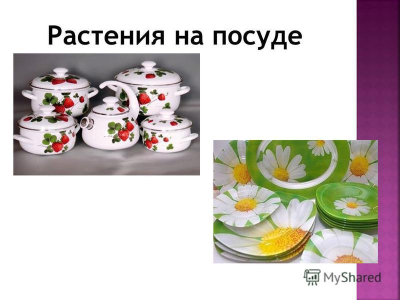 Растения на посуде