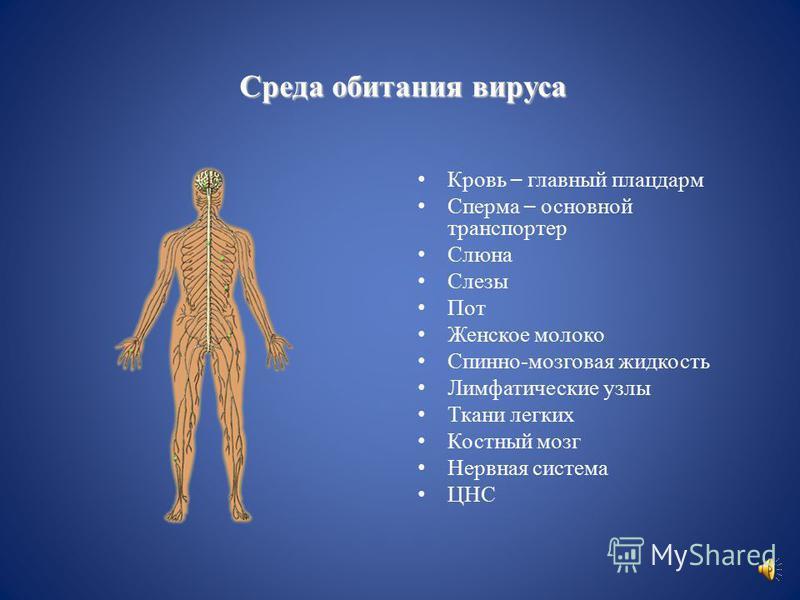 Мишени вируса иммунодефицита человека ВИЧ CD4- лимфоциты (хелперы) В- лимфоциты макрофаги клетки кишечника нервные клетки