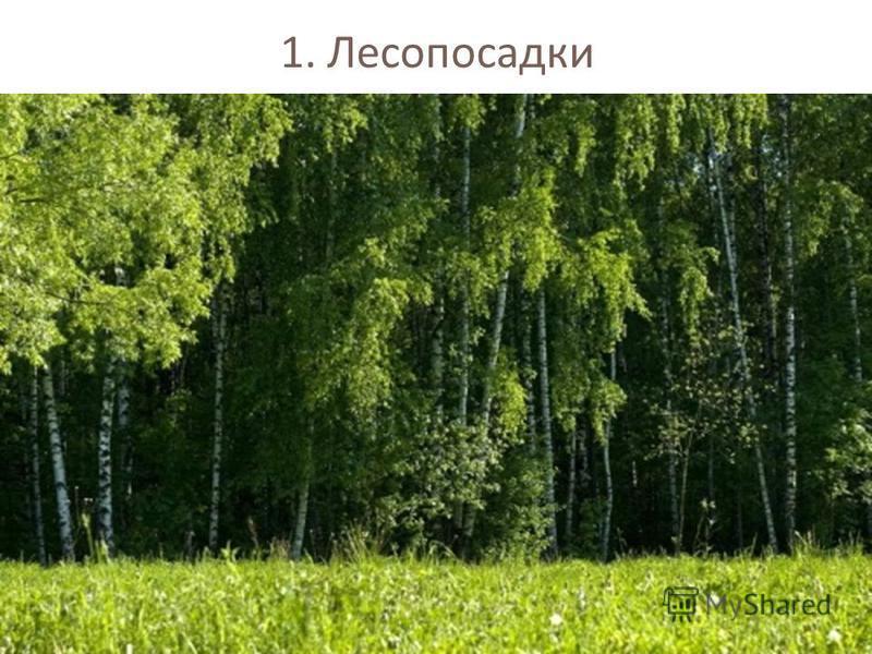 1. Лесопосадки