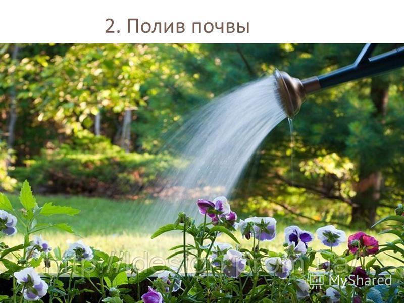 2. Полив почвы