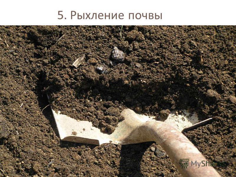 5. Рыхление почвы