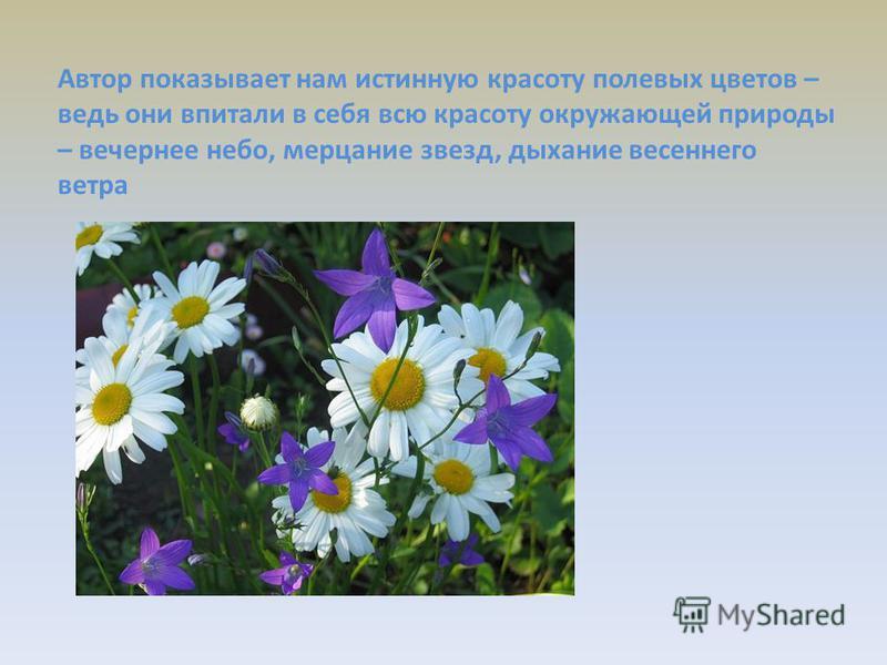 Автор показывает нам истинную красоту полевых цветов – ведь они впитали в себя всю красоту окружающей природы – вечернее небо, мерцание звезд, дыхание весеннего ветра