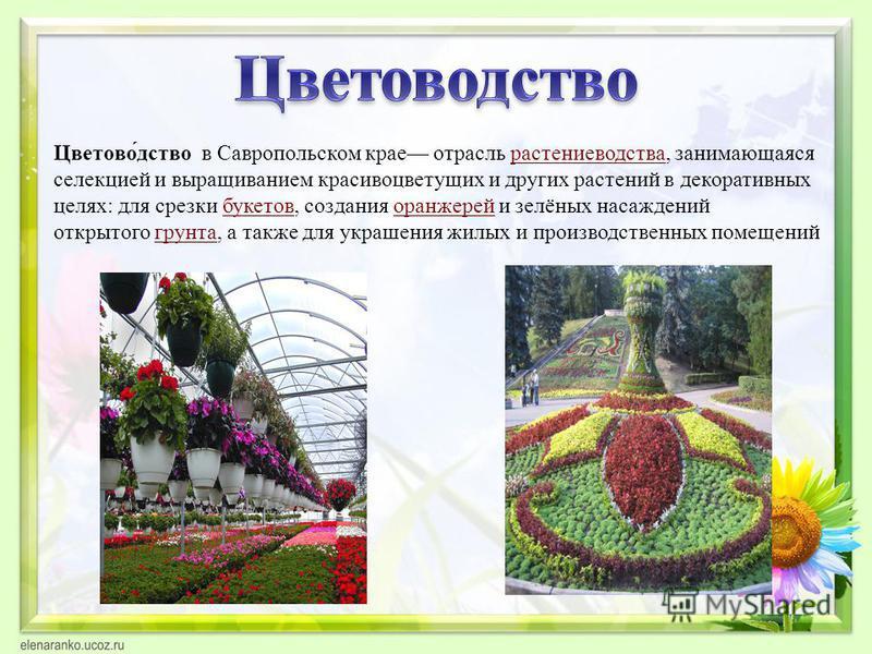 Цветово́детство в Савропольском крае отрасль растениеводства, занимающаяся селекцией и выращиванием красивоцветущих и других растений в декоративных целях: для срезки букетов, создания оранжерей и зелёных насаждений открытого грунта, а также для укра