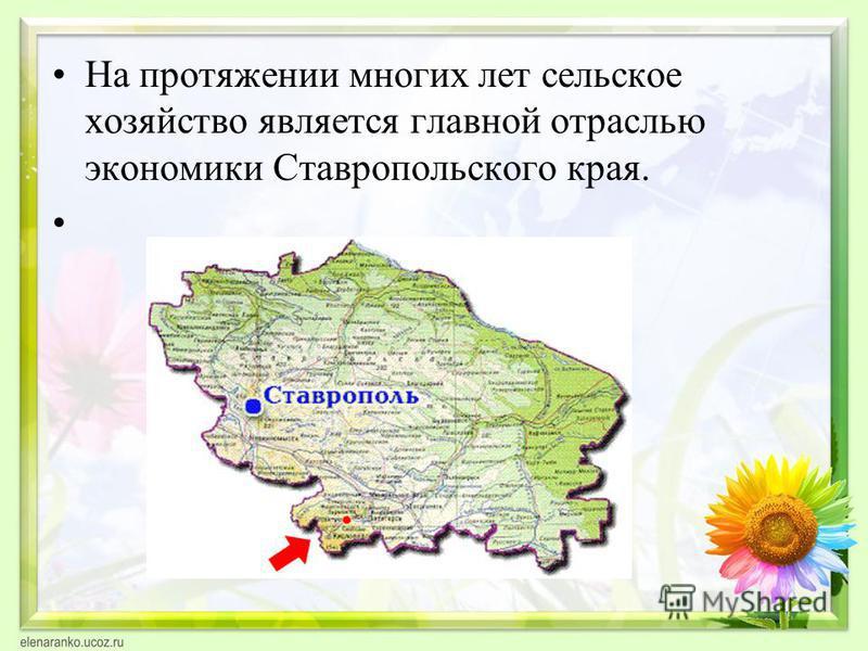 На протяжении многих лет сельское хозяйство является главной отраслью экономики Ставропольского края.
