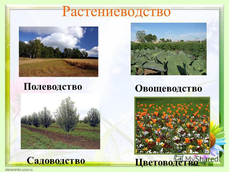 Растениеводетство Садоводетство Цветоводетство Полеводетство Овощеводетство